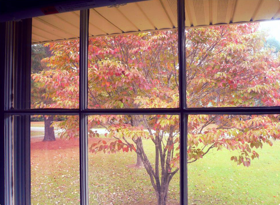 tree-outside-window-october-2013